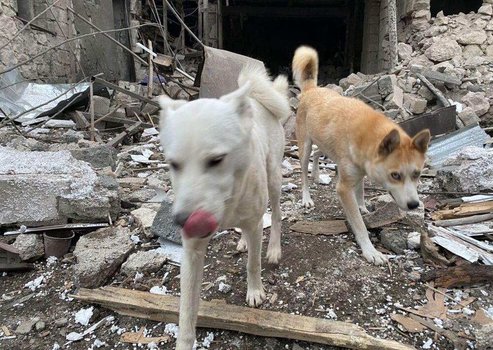 Cachorros passam por escombros de casas destruídas por ataque a Stepanakert