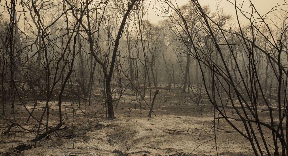Mata queimada por um incêndio florestal que atingiu a fazenda Santa Tereza, na região da Serra do Amolar, no Pantanal do Mato Grosso do Sul