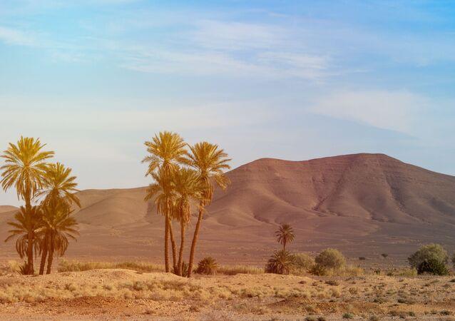 Árvores no deserto (imagem referencial)