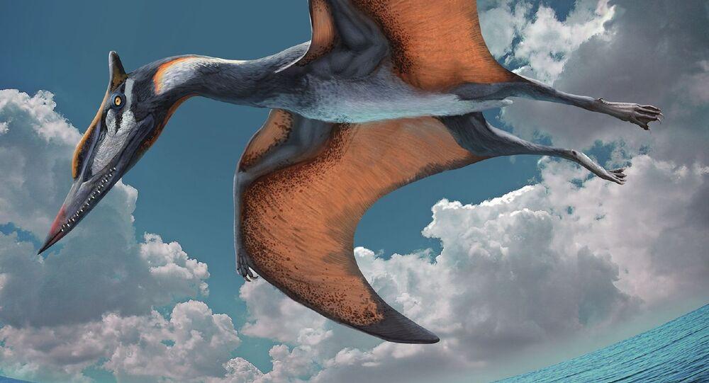 Representação artística de Ordosipterus planignathus