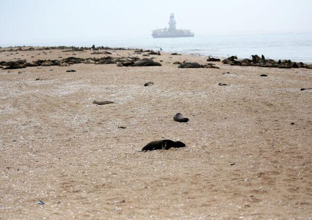 Um filhote de foca morto deitado em uma praia perto de Pelican Point, Namíbia