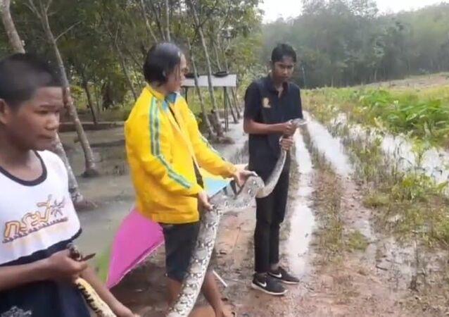 Pescador pega píton de 4 metros em sua rede na Tailândia