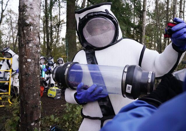 Pesquisadores realizam operação de remoção de vespas em árvore