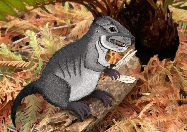 Representação artística do pequeno mamífero, Kataigidodon venetus