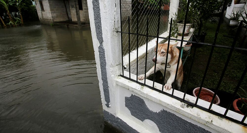 Cachorro observa atrás de um muro gradeado os efeitos de uma inundação causada pelo furacão Eta em Tela, Honduras