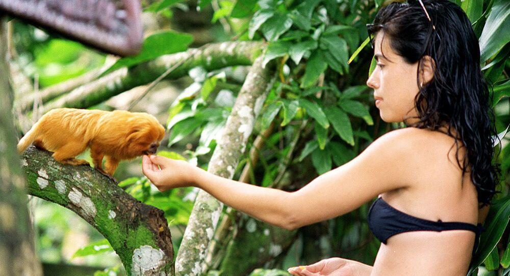 urista alimenta mico-leão-dourado em área de Mata Atlântica
