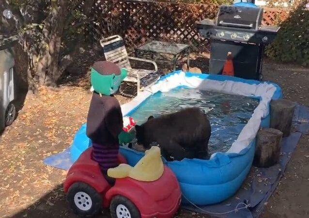 Filhote de urso esbanja alegria em piscina nos EUA