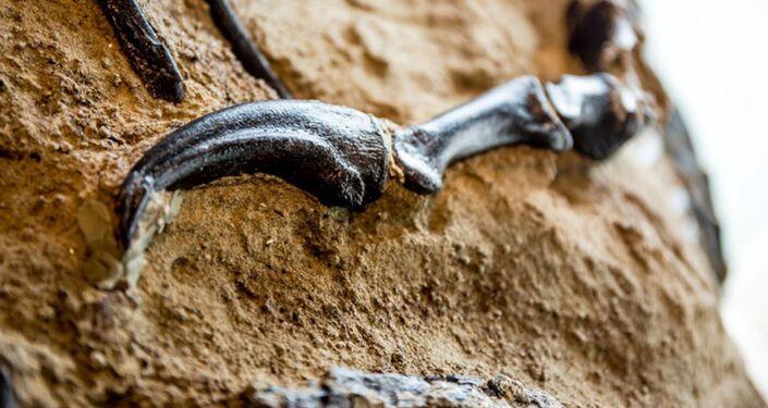 Cientistas revelaram ao mundo o primeiro fóssil completo de um Tiranossauro rex, encontrado após morrer em combate contra um Tricerátopo