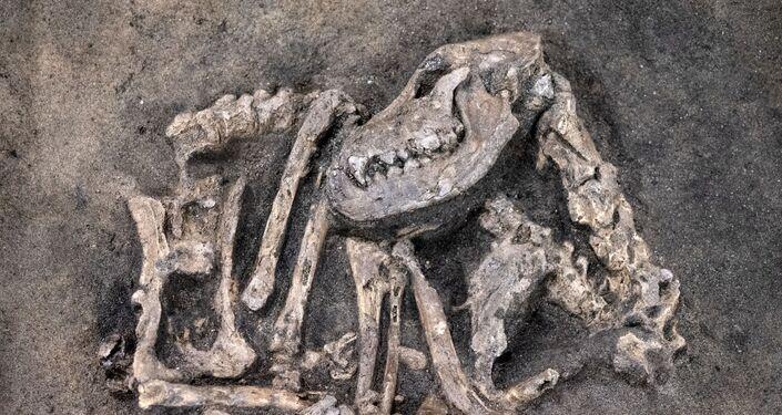 Esqueleto de cão da Idade da Pedra encontrado na Suécia