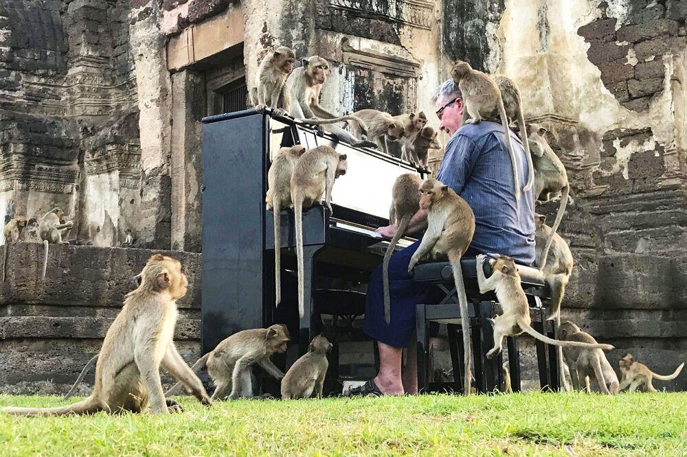 Músico britânico Paul Barton toca piano para macacos que ocupam áreas históricas de Lopburi, na Tailândia