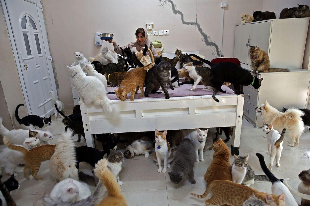 Maryam Al Balushi acumula alguns dos seus 480 gatos e 12 cachorros em sua casa na capital do Omã