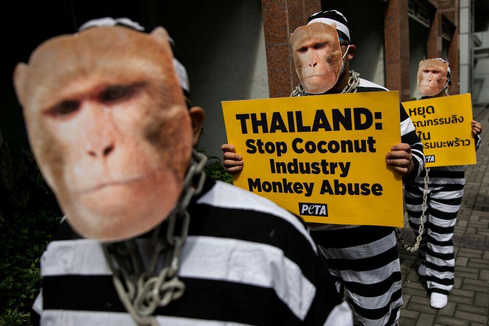 Ativistas da organização Pessoas pelo Tratamento Ético de Animais (PETA, na sigla em inglês), representando macacos acorrentados, protestam contra a indústria de leite de coco da Tailândia