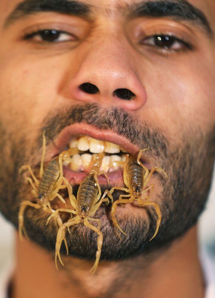 Mohamed Hamdy Boshta, de 25 anos, mostra os escorpiões que caçava nos desertos e na costa egípcia para extrair seu valorizado veneno para uso medicinal, em sua empresa Cairo Venom Company, Cairo, Egito, 6 de dezembro, 2020