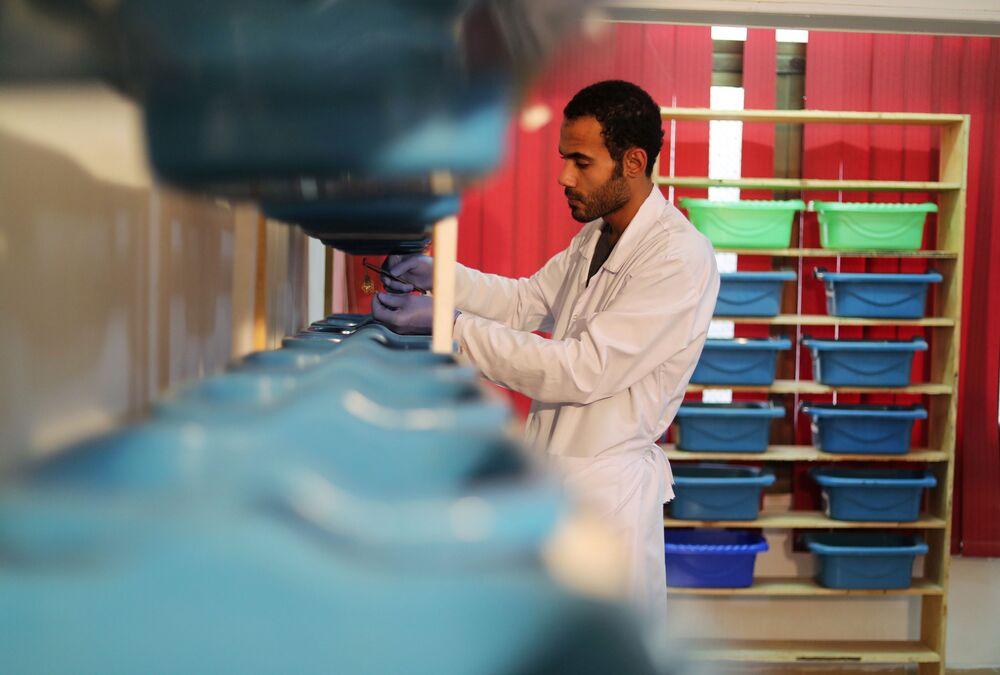 Mohamed Hamdy Boshta alimenta escorpiões que ele caçou nos desertos e na costa egípcia para extrair seu valorizado veneno para uso medicinal