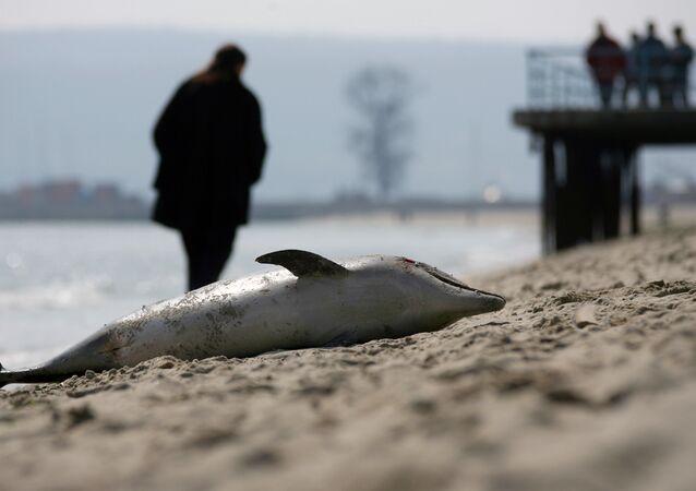 Golfinho morto (imagem de arquivo)