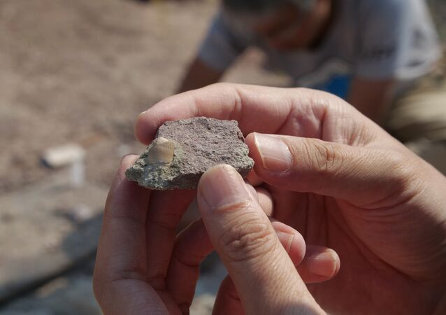 Paleontólogo trabalha escavando fóssil