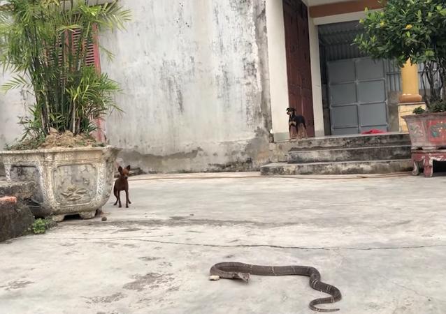 Cachorros e cobras