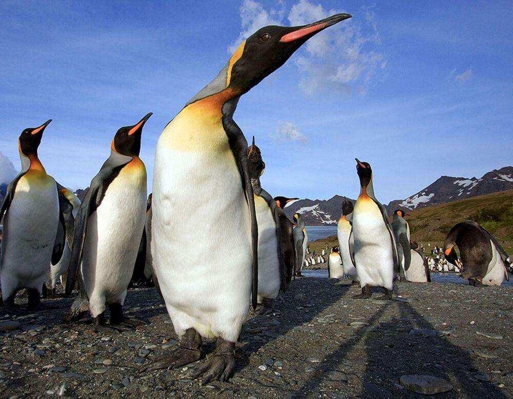 Pinguins na ilha de Geórgia do Sul em foto obtida pela Reuters em 11 de dezembro