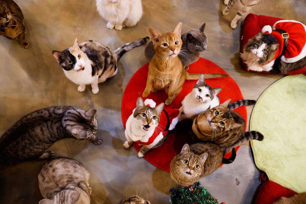 Gatos olham para cima em um jardim para gatos em Seul, Coreia do Sul, 14 de dezembro de 2020