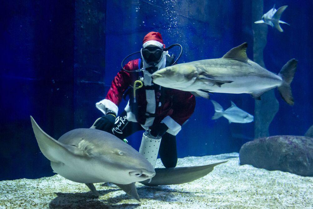 Aquarista Felipe Luna fantasiado de Papai Noel nada com tubarões no AquaRio, Rio de Janeiro, 12 de dezembro de 2020
