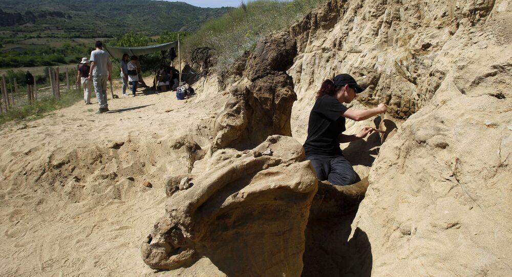 Grupo de paleontólogos trabalham escavando fósseis