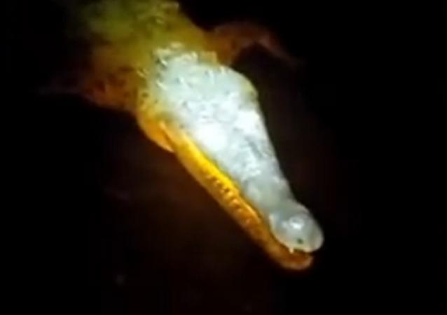 Crocodilo demoníaco