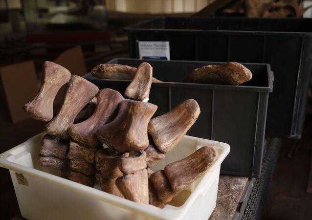 Fóssil de dinossauro no Museu Nacional (imagem ilustrativa)