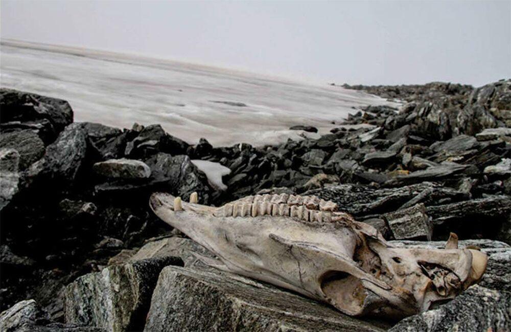 Crânio de cavalo encontrado em geleira da Noruega