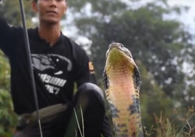 Cobra da pesada