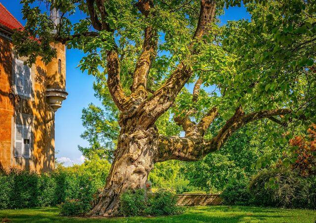 Jardim Reino Unido