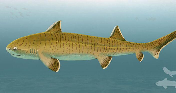 Espécie extinta de tubarão Asteracanthus