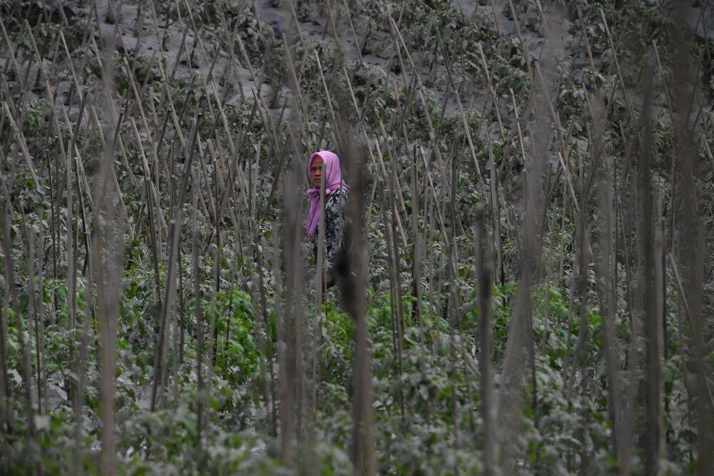 Mulher caminha por um campo coberto de cinzas vulcânicas após a erupção do Monte Semeru, na ilha de Java, Indonésia, em 17 de janeiro de 2021