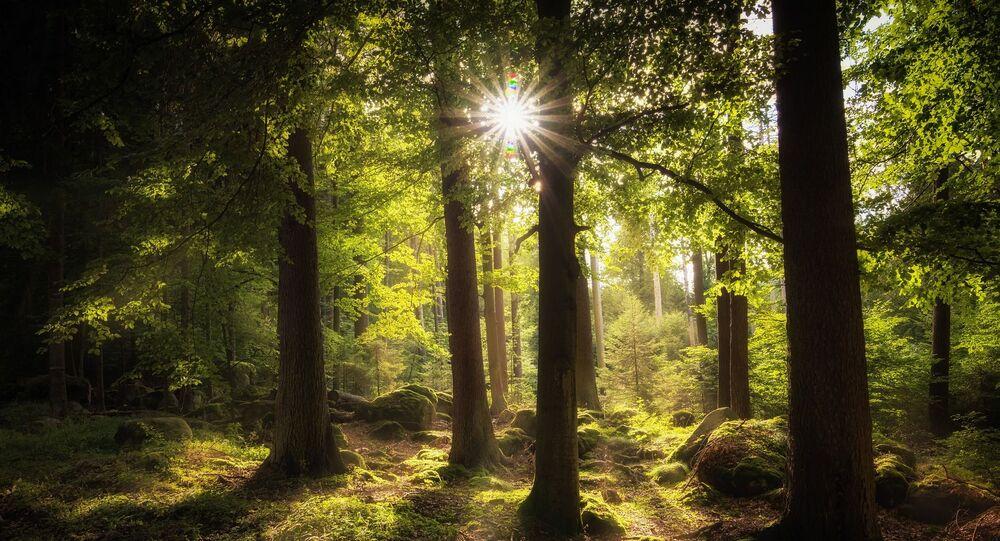 Sol e árvore