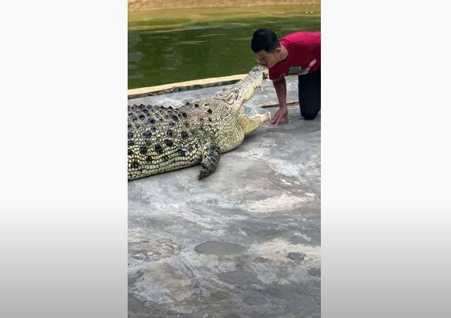 Beijo no crocodilo