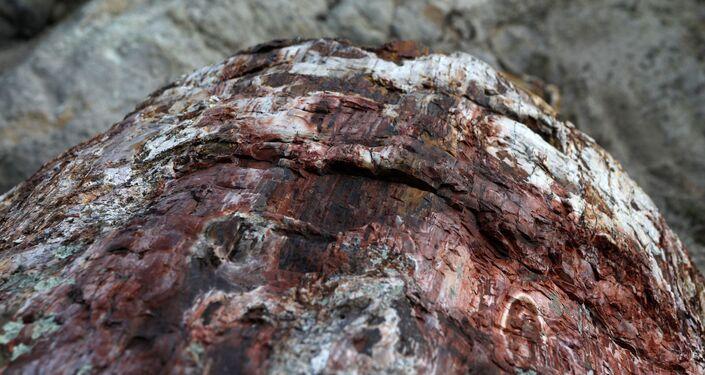 Um detalhe de árvore fossilizada no Parque Nacional da Floresta Petrificada na ilha de Lesbos, Grécia