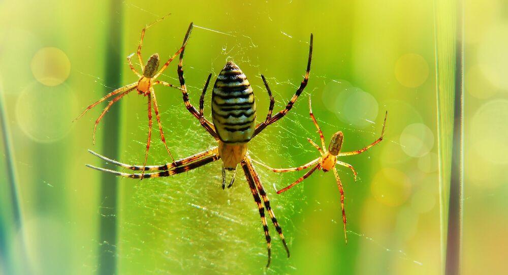 Aranhas (imagem referencial)