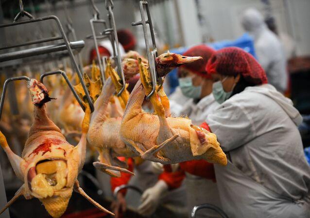 Trabalhadores em frigorífico de aves