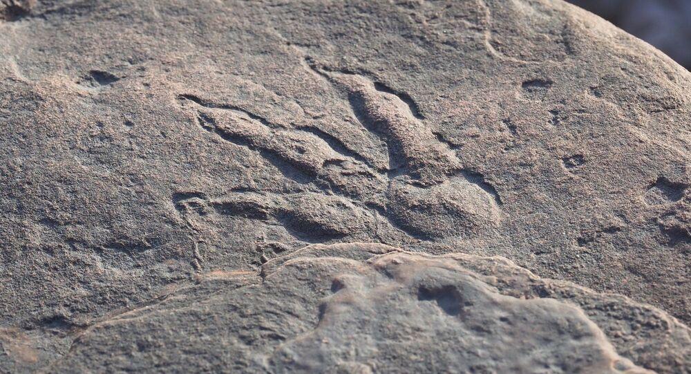 Pegada de dinossauro preservada na lama de aproximadamente 220 milhões de anos (imagem ilustrativa)