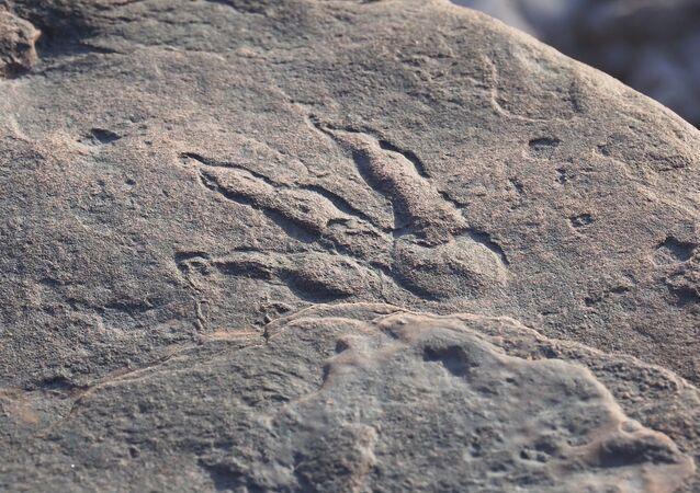 Pegada de dinossauro preservada na lama de aproximadamente 220 milhões de anos