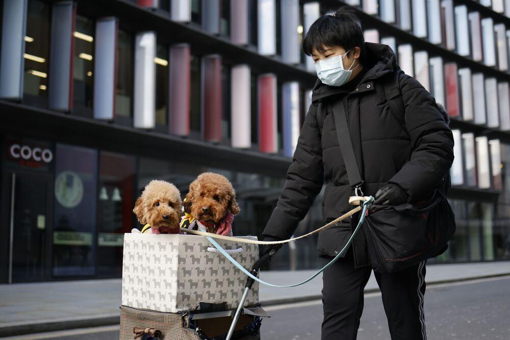 Mulher com dois poodles em carrinho de compras na City de Londres, 22 de janeiro de 2021