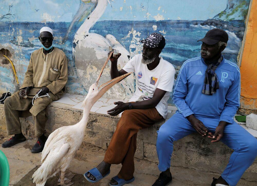 Homem sentado com seu pelicano, em Dakar, Senegal, 22 de janeiro de 2021