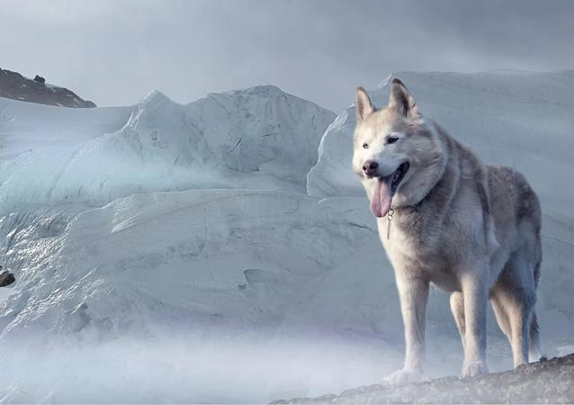 Cachorro (imagem referencial)