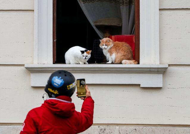 Homem tira uma foto de gatos sentados em uma janela em Roma, Itália