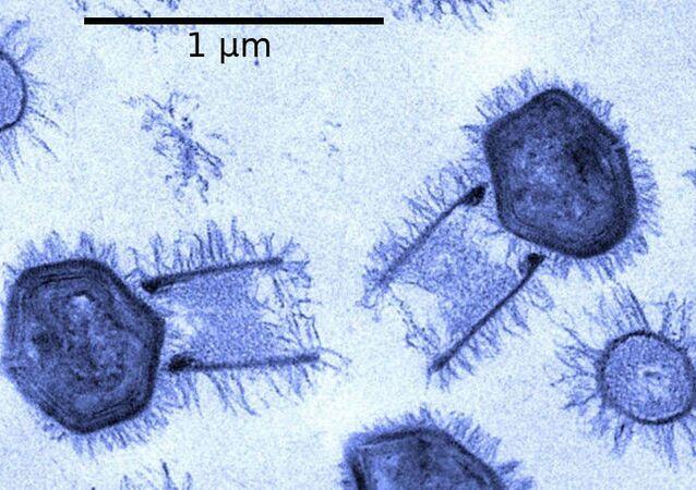 Foto do Tupanvirus (imagem referencial)