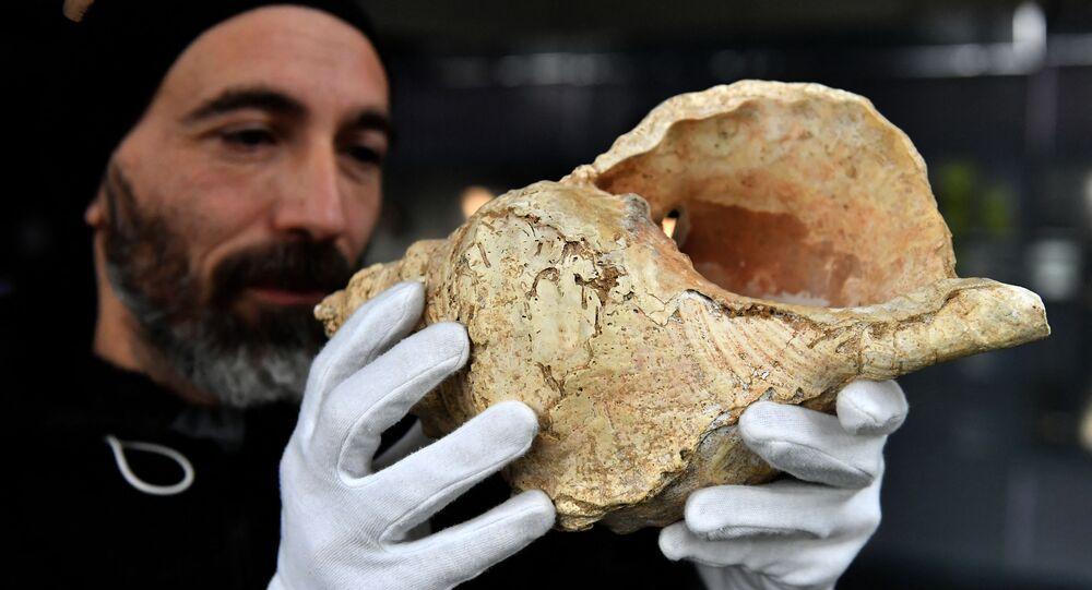 Concha foi encontrada na caverna de Marsoulas