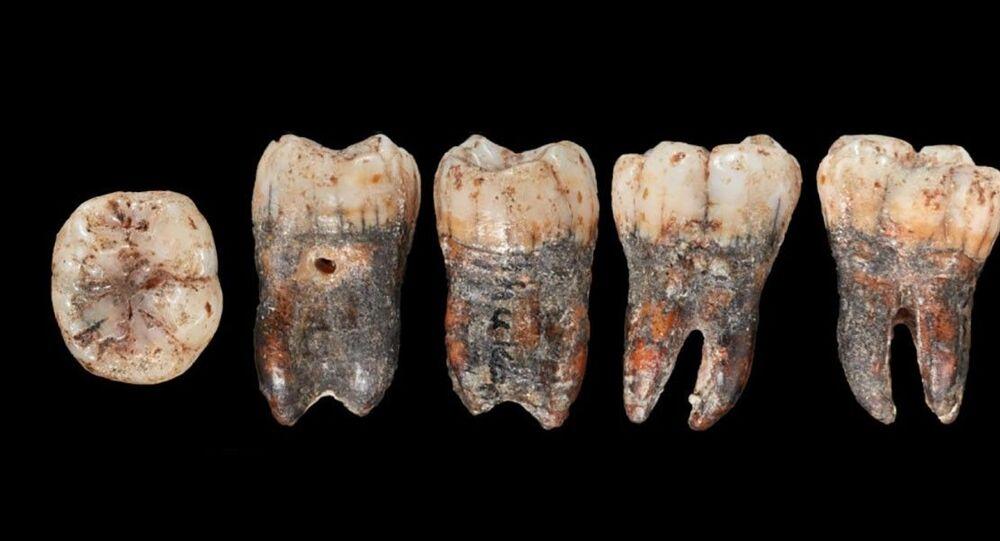 Dentes de neandertal encontrados na caverna Shuqba, na Palestina