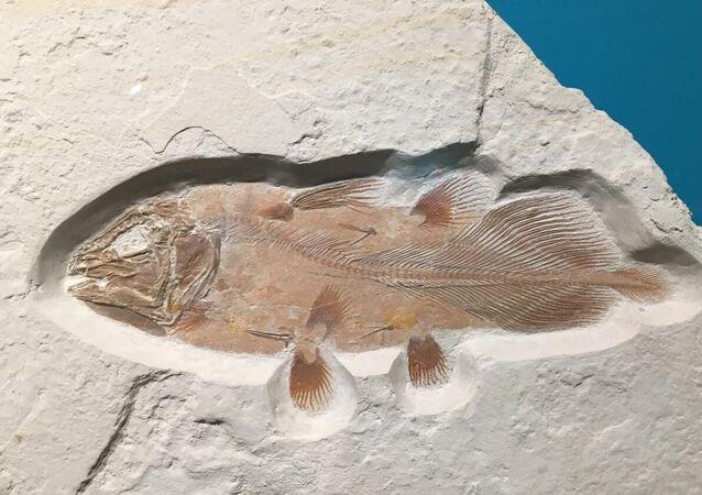 Fóssil de celacanto