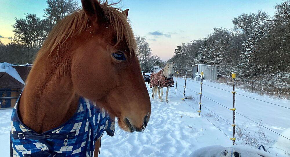 Bebedouro de cavalo com água congelada no Texas.
