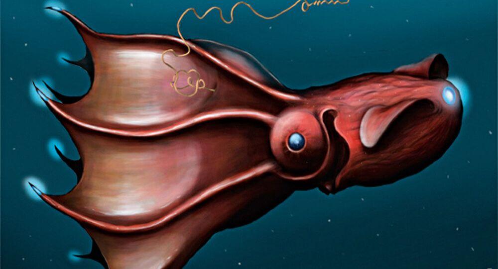 Vampyroteuthis infernalis (representação artística)