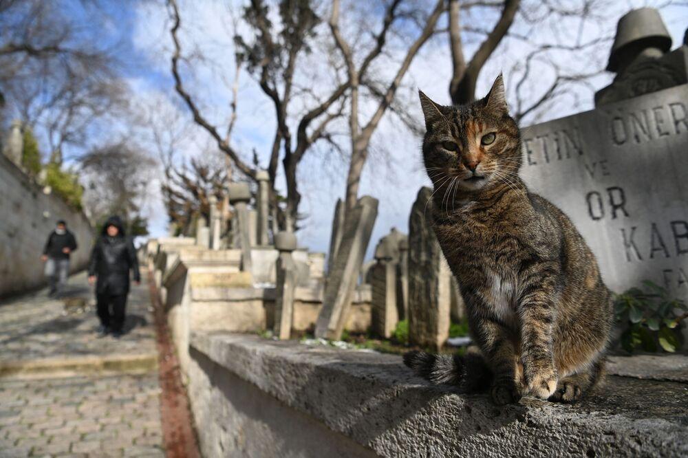 Gato em cemitério histórico de Istanbul, Turquia, após forte nevasca, 16 de fevereiro de 2021